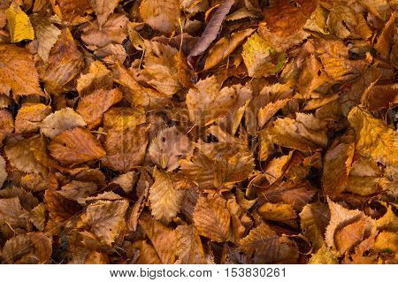 Fall leaves background, Nature and season concept.