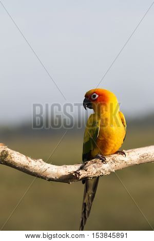 Parrot on blue sky background in the morning.