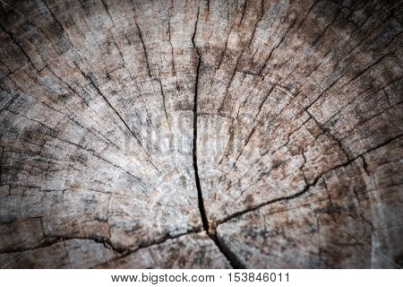 Soft Focus Texture Of Wood For Background