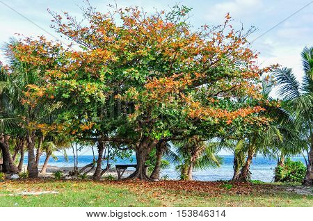 Trees with colorful leaves on Mana Island Fiji