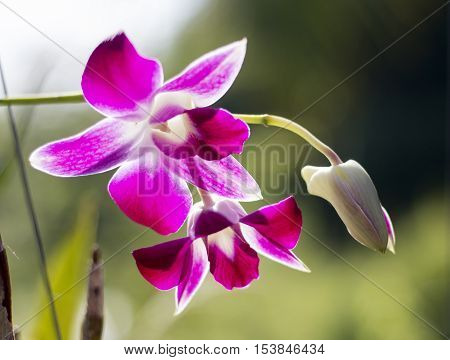 Orchid Flower On Branch  Background At Morning Time
