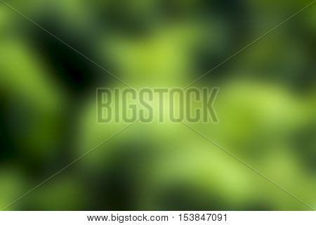 abstract Blurred color leaf and light for  Background