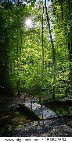 Little Bridge In The Beech Forest