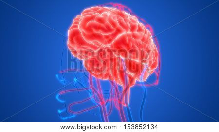 3D Illustration of Human Brain with Circulatory System
