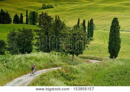 Val d'Orcia Siena mountain bike excursion in the Tuscan hills - the road Mezzoquarto Checche