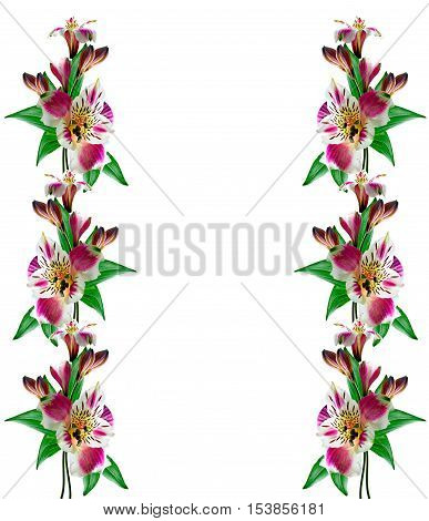 Bouquet of flowers alstromeria isolated on white background.