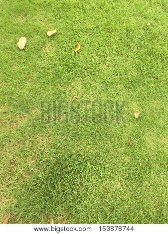 Grass  Grass Grass Grass Grass Grass Grass