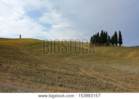 Typical landscape in Tuscany farmhouse and cypress on the hills of Val d'Orcia - Italy