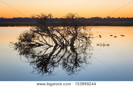 Tree silhouette at dawn at Herdsman Lake in Perth Western Australia.