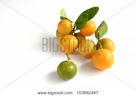 Group of orange kumquat placed on white background