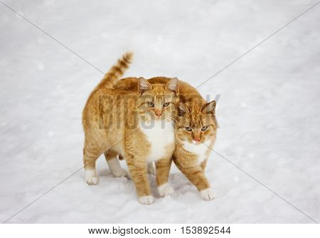 Two cats nestled to each other outdoor in snowy background, best friends forever.