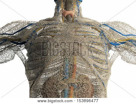 Human anatomy front of chest covered in network of dots. Bio-tech skin, disease or molecular biology. Sensory points or cells. 3D illustration.