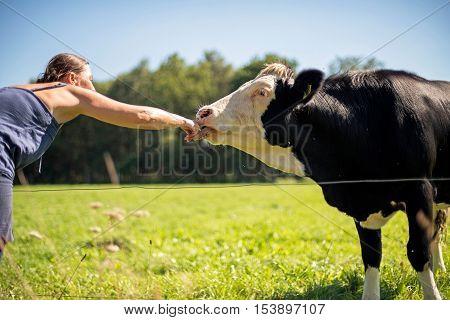 Woman stroking the nose of a cow standing in meadow. Winterswijk. Achterhoek. Gelderland. The Netherlands.