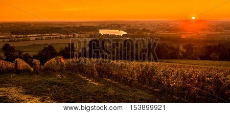 Vineyard Sunrise, Bordeaux Vineyard, Saint Emilion, France, Europe