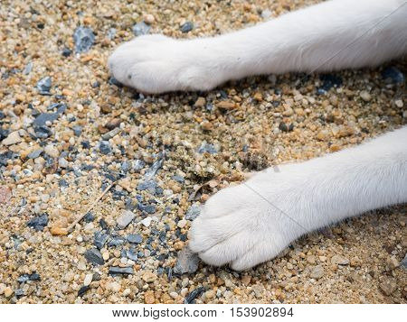 Cat's feet on the sand. relax day