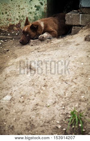 Homeless cute little puppy mongrel. Lonely stray dog. Sad lost pet