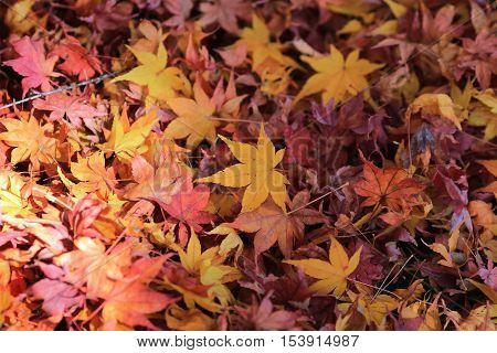 Fall leaves indicating the seasonal at 2014