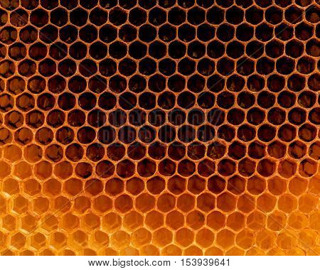 Closeup Raw Organic Honeycombs . Newly Pulled Honey Bee Honeycomb Beeswax . Homeopathic Food Concept