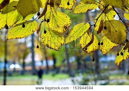 Autumn green leaf in the park with blurred background