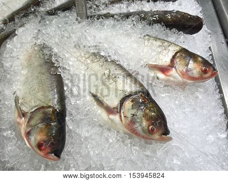 Bighead carp in the ice sold in supermarket Thailand