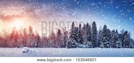 Beautiful tree in winter landscape in late evening in snowfall