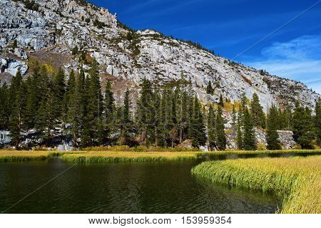 Alpine Lake surrounded by grasslands and a Pine Forest taken in the High Sierra Nevada Mountains, CA