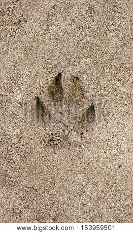 Canis was here and left their mark in sand