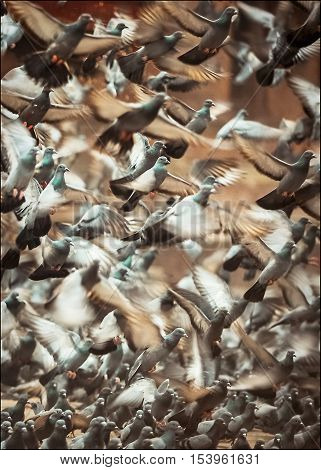 A flock of pigeons in Durbar Square in backlit . Kathmandu. Nepal.