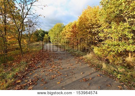autumn colored deciduous trees at forest road