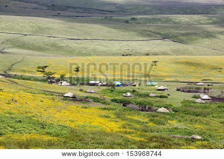 Flowering valley Ngorongoro Crater Conservation Area with the village of Massai, Tanzania. East Africa
