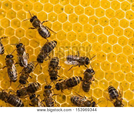 Working Bees On Honey Cells