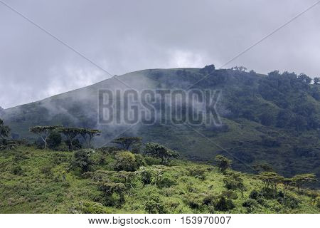 Wooded hills in the background of a stormy sky and fog rising from the lowlands in Ngorongoro Crater Conservation Area,Tanzania. East Africa