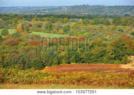 Ashdown Forest In Autumn