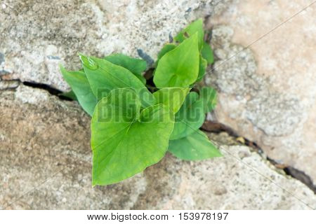 small plant breaking out from cement ground