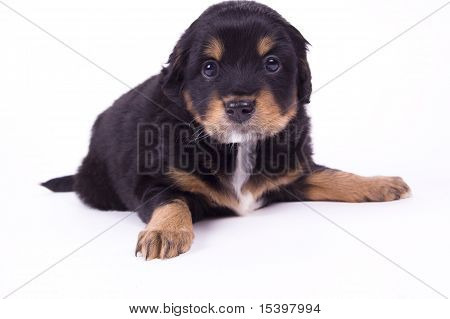 Very Good Dog