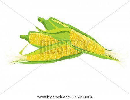 Maize. Vector illustration