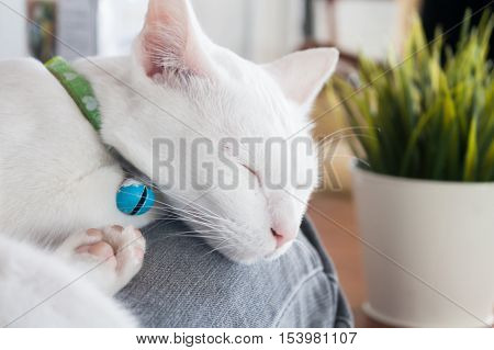 White cat sleeping in cat cafe, stock photo