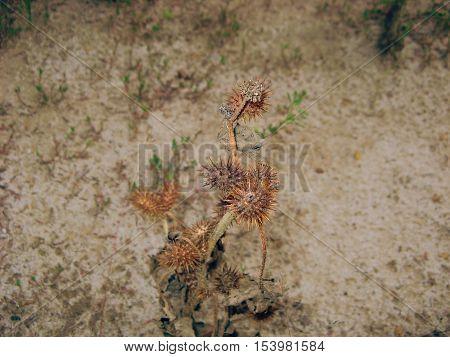 Dry plant on the dry ground. Desert plant on dry ground.
