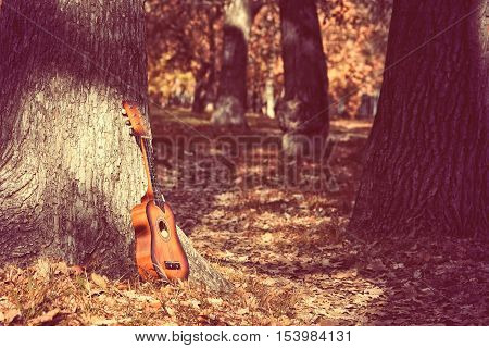 old little guitar standing by tree in autumn park toned image