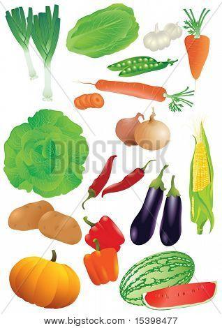 Vector set of 14 fresh vegetables.