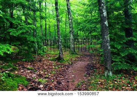 Porcupine Mountains Wilderness Trail Landscape in Michigan