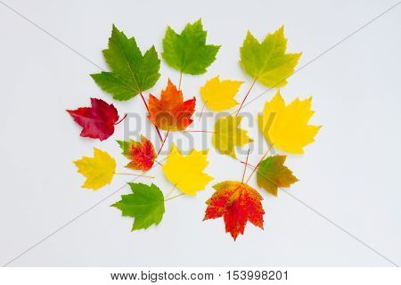 Green, red and yellow leaves on a white background.