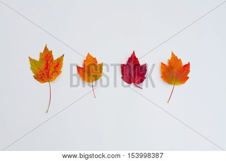 Red and Orange leaves on a white background.