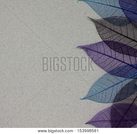 Gray paper background with blue and purple leaf skeletons