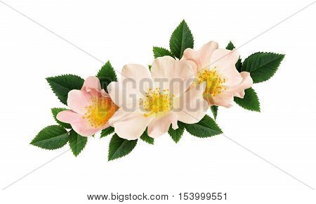 Briar flowers arrangement isolated on a white background