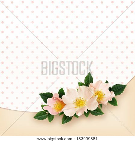 Briar flowers arrangement on polka dot and pink background