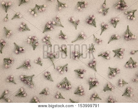 Small pink flowers on gray paper background. Flat lay. Filtered version.