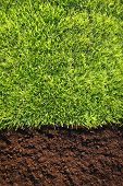 Healthy grass and soil background similar available in my portfolio poster