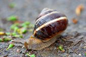Snail outside in nature poster