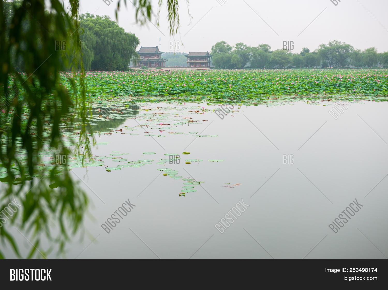Blooming Lotus China Image Photo Free Trial Bigstock